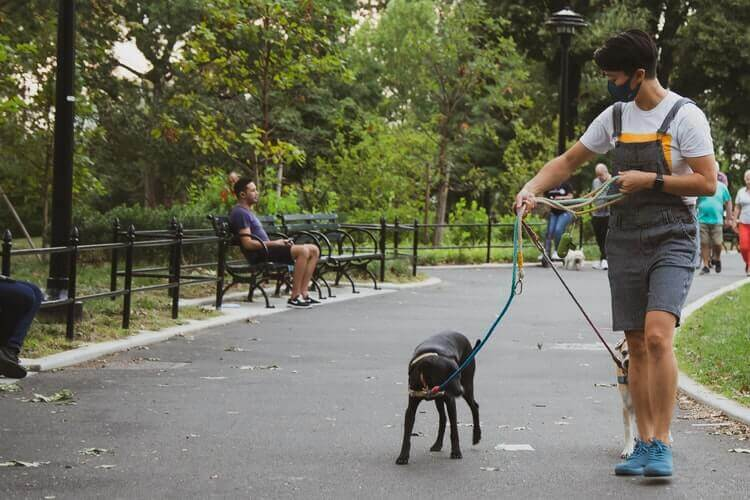 Man walking dog in the park